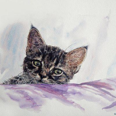 Aquarelle chat Touna