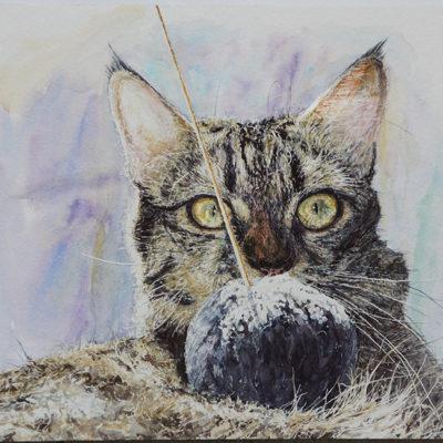 Portrait Chat Patrick Salducci